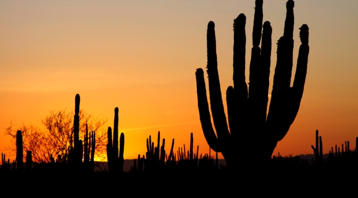 sonoran_desert_sunset